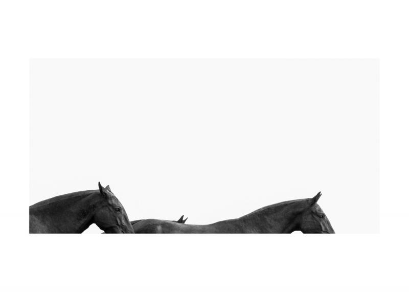Menorquin Horse: #004